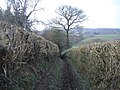 Path to Upper Hergest - geograph.org.uk - 377471.jpg