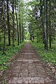 Pathway in the park of College of Energetics and Electronics, Botevgrad, Bulgaria.jpg