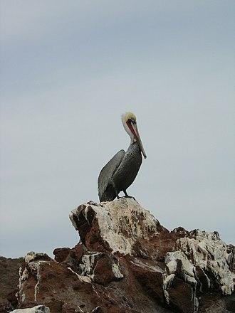 El Vizcaíno Biosphere Reserve - A pelican on the coast of the El Vizcaíno Biosphere Reserve