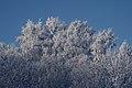 PermaLiv Byvegen-Overnvegen-vinter-trær 29-01-21 4.jpg