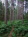 Petroglyphs Forest.JPG