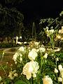 Piazza Merlin, vista notturna (Rovigo).JPG