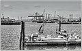 Pier D Long Beach (117714727).jpeg