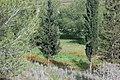 PikiWiki Israel 18957 Anemones in Beeri forest.JPG
