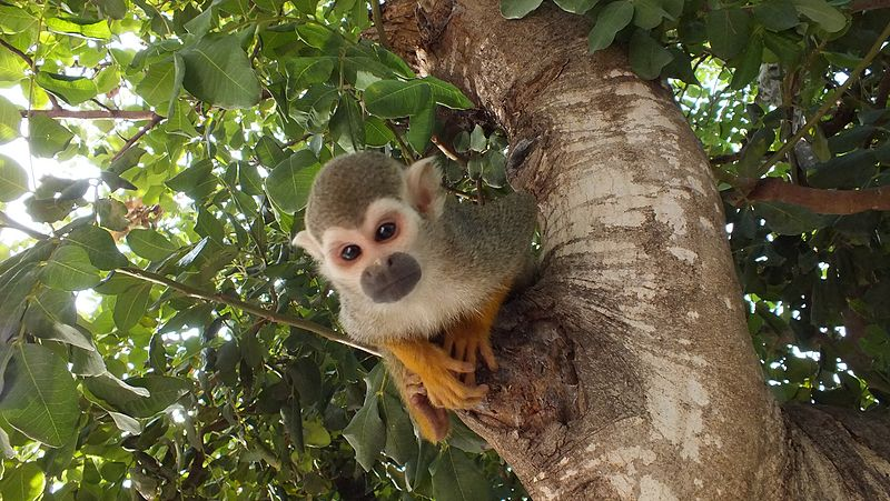 קוף על עץ בפארק הקופים ביער בן שמן