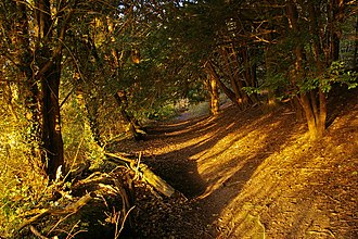 Pilgrims' Way - A section of the lower route, eroded into the slope, in Surrey