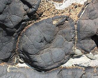 Pillow lava - Pillow lava near Oamaru, New Zealand