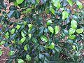 Plant, Madurai.jpg