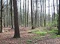Plantation - geograph.org.uk - 1260.jpg