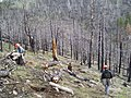 Planters working on the Modoc NF (3821495170).jpg
