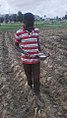 Planting corn on the farm.jpg