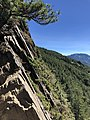 Plants on the Cliff of Hehuanshan.jpg