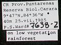 Platythyrea punctata psw7638-2 label 1.jpg
