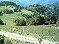 Pogled s Donje Ravni Zec planina - panoramio.jpg