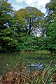 Pond at Tatton Park.jpg