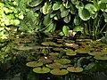 Pražská botanická zahrada - panoramio (1).jpg