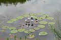 Pretoria Botanical Gardens-044.jpg