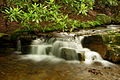 Pretty-little-waterfall - West Virginia - ForestWander.jpg