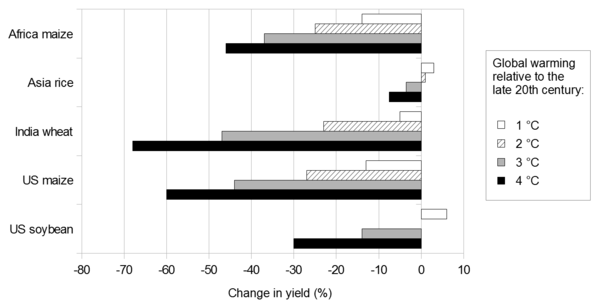 2011 projected changes in yields of selected crops with global warming. This graph is based on several studies. Projected changes in yields of selected crops with global warming.png