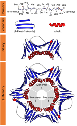 Proteins Concept Map.Protein Structure Wikipedia