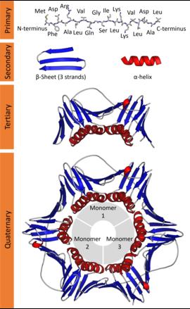 biomolecules examples