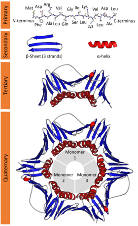 Protein structure (full).png