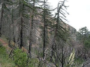 Lytle Creek, California - Middle Fork of Lytle Creek