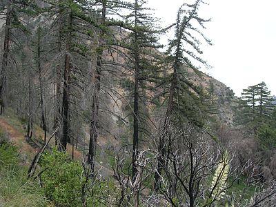 Lytle Creek
