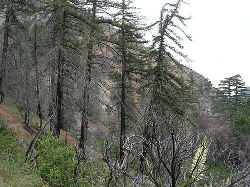 Lytle Creek mailbbox