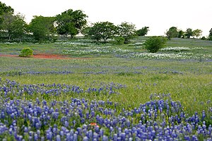 Ranch and pastureland with wildflowers in the Blackland Prairie eco-region of Texas. County Road 268, Lavaca County, Texas, USA (19 April 2014).jpg