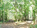 Rauchfangswerder Nord - Waldweg (Woodland Paths) - geo.hlipp.de - 42500.jpg