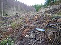 Recently felled spruce woodland - geograph.org.uk - 303454.jpg
