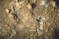 Reconstitution squelette Pierrette Paléosite.jpg