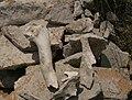 Red rock - bones 5.jpg