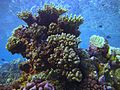 Reef2182 - Flickr - NOAA Photo Library.jpg