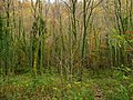 Regenerating woodland - geograph.org.uk - 1041804.jpg