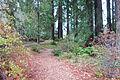 Regional Parks Botanic Garden - Berkeley, CA - DSC04410.JPG