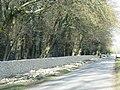 Repairs to dry stone wall - geograph.org.uk - 1747829.jpg