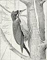 Results of a biological survey of mount Shasta, California (1899) (14781971574).jpg