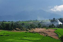 Ricefield view in Minangkabau.jpg