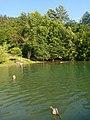 Rijeka Drina 17.jpg