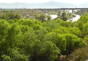 Salt River (Arizona) - The Salt River passing below the Central Avenue Bridge in South Phoenix after winter rains in early 2010