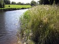 River Bladnoch - geograph.org.uk - 866100.jpg