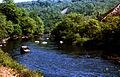 River Tamar, Clitters Wood, Gunnislake 1978 - geograph.org.uk - 64702.jpg