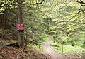 Romania - trail in forest 6.jpg
