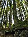 Roots (3).jpg