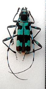 редкие насекомые тюменской области