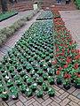 Rose Festival flower show (2560061436).jpg