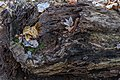 Rotten Log at Red Wing Park.jpg