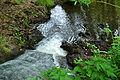 Ruisseau dans une forêt d'Alsace.JPG